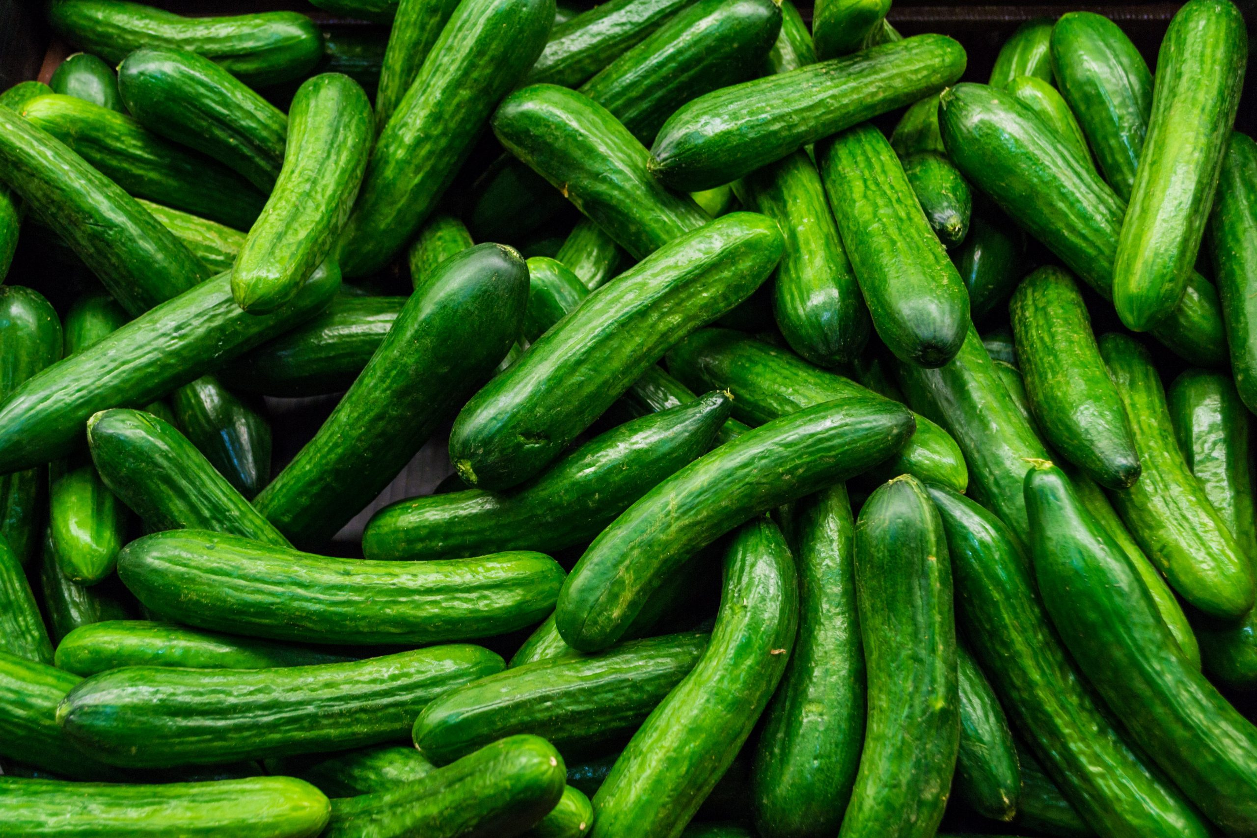 How To Grow Cucumbers With Hydroponics