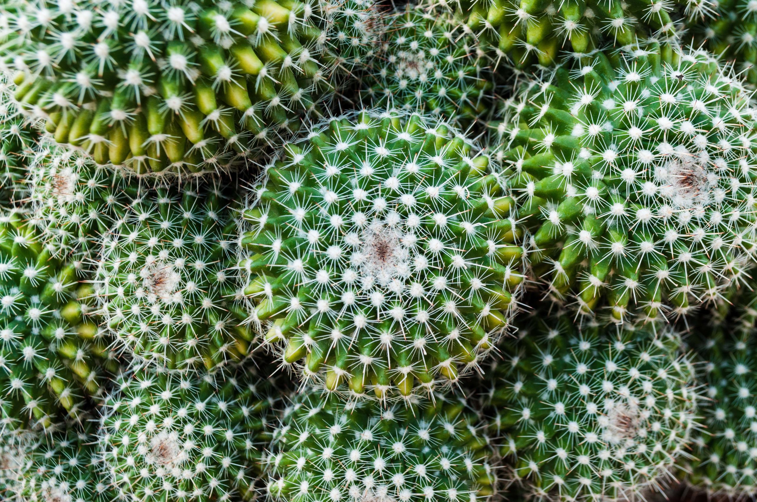 How To Grow A Hydroponic Cactus